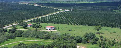 Arial View of Hummingbird Estates of Belize